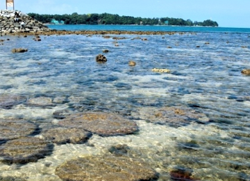 A First-Hand Experience of Marine Fauna & Flora Between Tides
